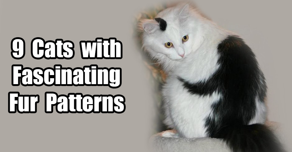 40 Cats With Fascinating Fur Patterns Weather Kitty Chronicle Awesome Cat Fur Patterns